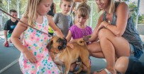 children meeting dogs