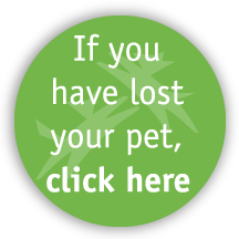 Lost Your Pet