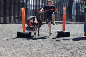 dog fest obstacle course