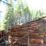 Lyons Log Truck Death