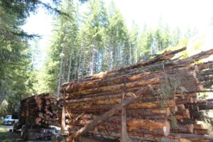 Lyons Log Truck Death